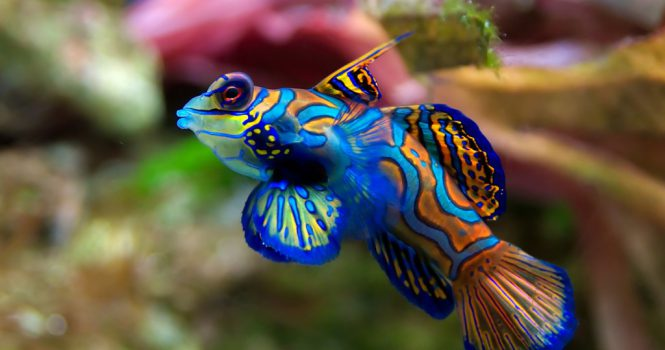 colorful_fishes_20